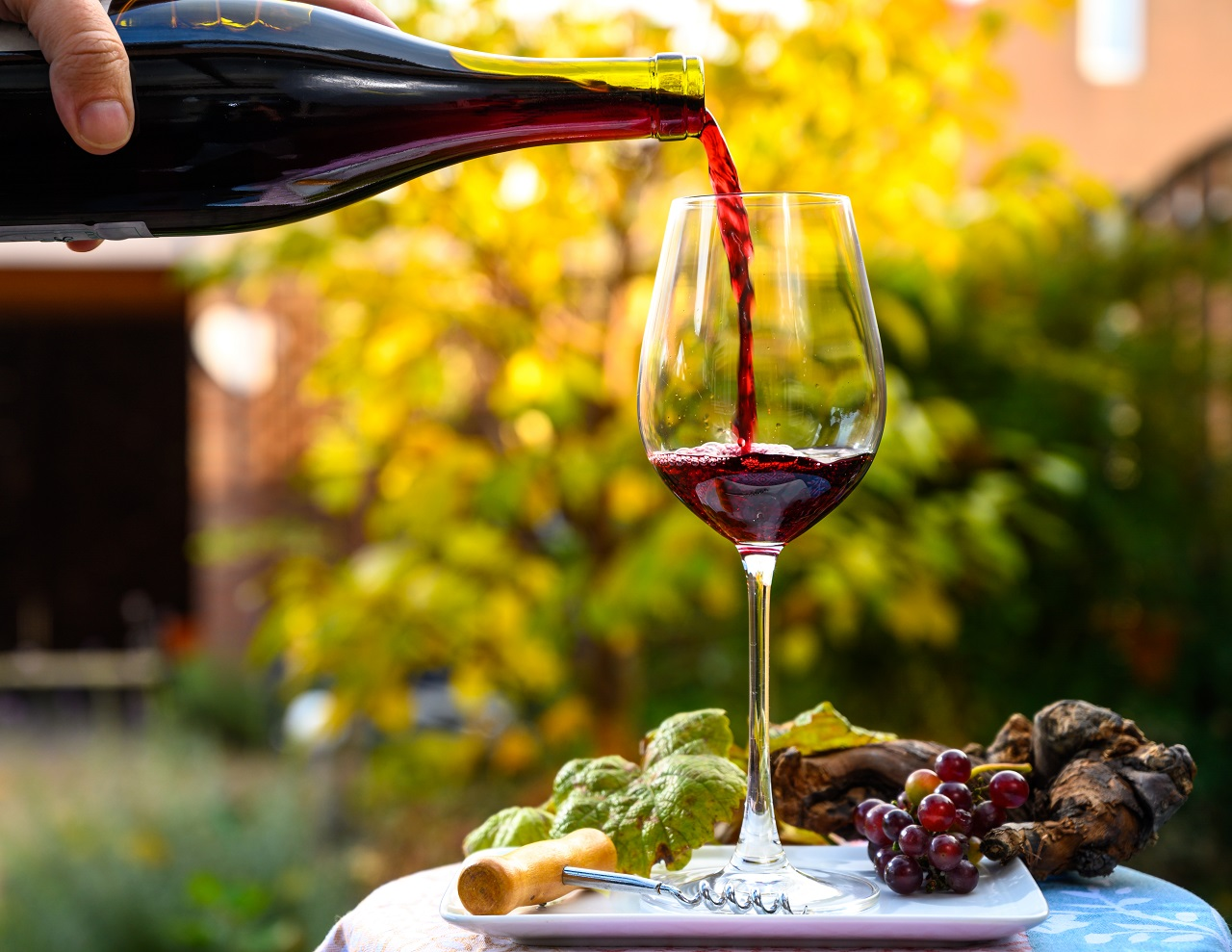 Pouring-yound-red-beaujolais-wine-in-glass-during-celebration-of-end-of-harvest-and-first-sale-release-on-third-Thursday-of-November-in-sunny-day-in-Burgundy-France